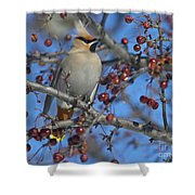 A Bird For Its Crest.. Shower Curtain