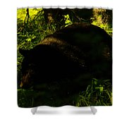 A Black Bear Shower Curtain