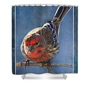 A Blue Morning Housefinch Shower Curtain