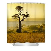 A Boab Sunrise Shower Curtain