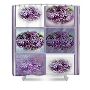 A Bouquet Of Lilacs Shower Curtain