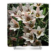 A Bouquet Of Miniature Tulips Celebrating The Spring Season - Vertical Shower Curtain