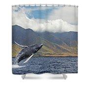 A Breaching Humpback Whale  Megaptera Shower Curtain