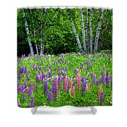 A Breathless Moment Among Lupine Shower Curtain