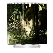 A Buck Deer Grazes Shower Curtain
