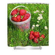 A Bucket Of Strawberries Shower Curtain