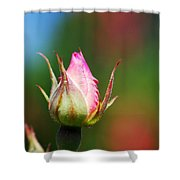 A Budding Rose Shower Curtain