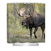A Bull Moose Named Gaston Shower Curtain