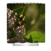 A Bumble Shower Curtain