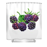 A Bunch Of Blackberries Shower Curtain