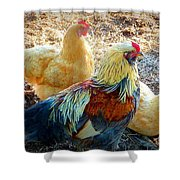 A Bunch Of Chickens Shower Curtain