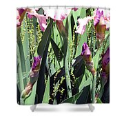 A Bushel Of Pink Shower Curtain