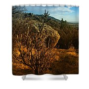 A Cactus In The Sandia Mountains Shower Curtain