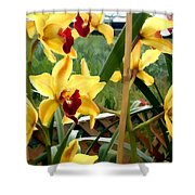 A Cage Of Canary Cymbidiums Shower Curtain