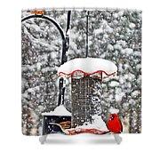 A Cardinal Winter Shower Curtain
