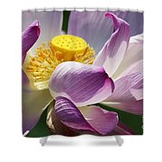 A Casual Water Lily Shower Curtain