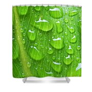 A Cleansing Morning Rain Shower Curtain