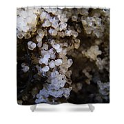 A Closer Look Herring Roe Shower Curtain