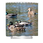 A Cluster Duck Shower Curtain