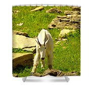 A Goat Coming Down The Trail Shower Curtain