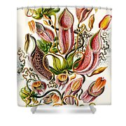 A Collection Of Nepenthaceae Shower Curtain