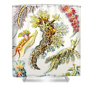 A Collection Of Nudibranchia Shower Curtain