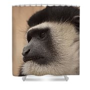 A Colobus Monkey Shower Curtain
