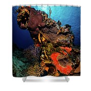 A Colorful Reef Scene With Sunburst Shower Curtain