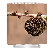 A Conifer Cone On A Tree Branch Shower Curtain