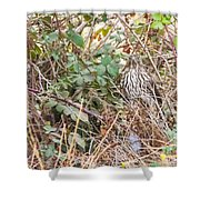 A Coopers Hawk  Shower Curtain