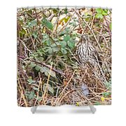 A Coopers Hawk Hidding Shower Curtain