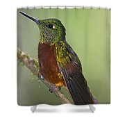A Coronet Without A Coronet.. Shower Curtain