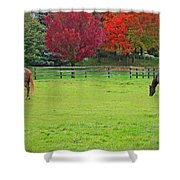A Couple Horses And Beautiful Autumn Trees Shower Curtain