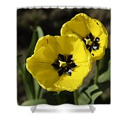 A Couple Of Bright Yellow Tulip Flowers Shower Curtain