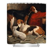 A Couple Of Foxhounds With A Terrier The Property Of Lord Henry Bentinck Shower Curtain