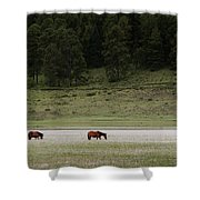 A Couple Of Horses Standing Shower Curtain