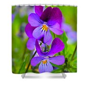 A Couple Of Pansies Shower Curtain