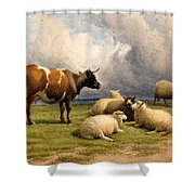 A Cow And Five Sheep Shower Curtain