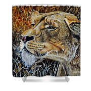 A Curious Lioness Shower Curtain