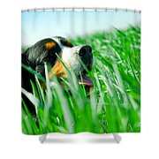 A Cute Dog In The Grass Shower Curtain