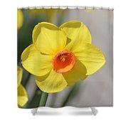 A Daffodil Hello Shower Curtain