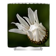 A Daisy Blooming Shower Curtain