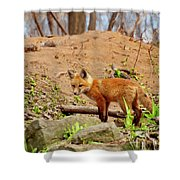 A Day At The Den Shower Curtain