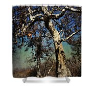A Day Like This Shower Curtain by Laurie Search