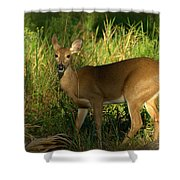 A Dear Deer Landscape Shower Curtain