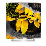 A Different Kind Of Sunflower Shower Curtain