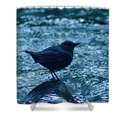 A Dipper On A Rock Shower Curtain