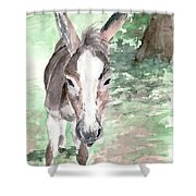 A Donkey Day Shower Curtain