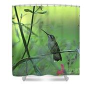 A Dreamer  Shower Curtain