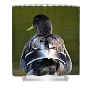 A Duck's Tale Shower Curtain